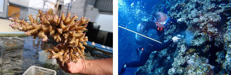 Coral bundle and transplanting done on October 5 event